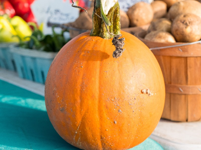 Pumpkins, apples and more: October at the market.
